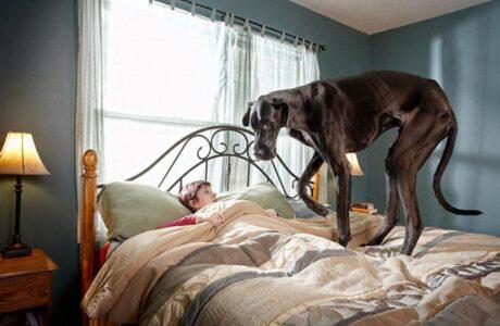 Бачити уві сні велику собаку