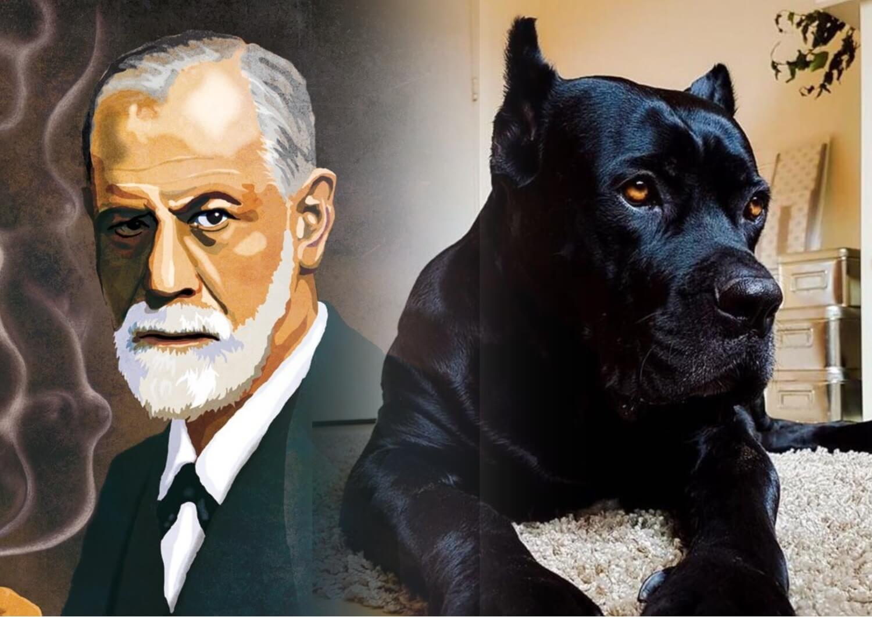 К чему снится большая собака по Фрейду.
