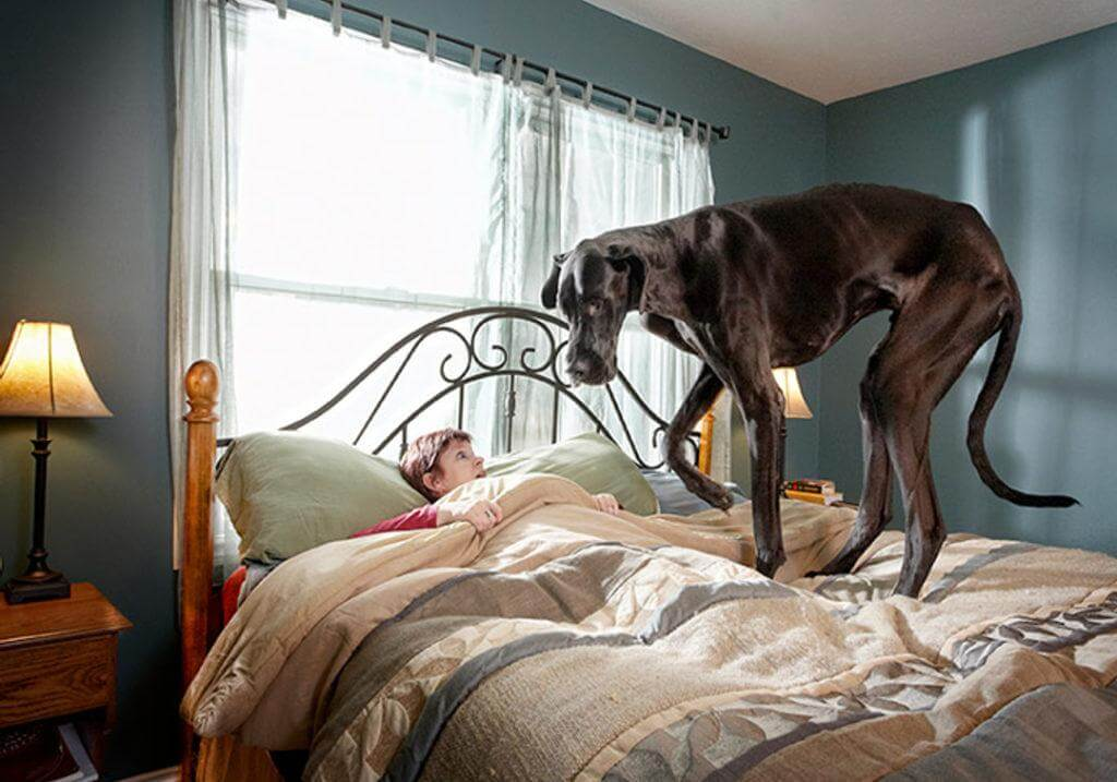 Большая собака к чему снится.