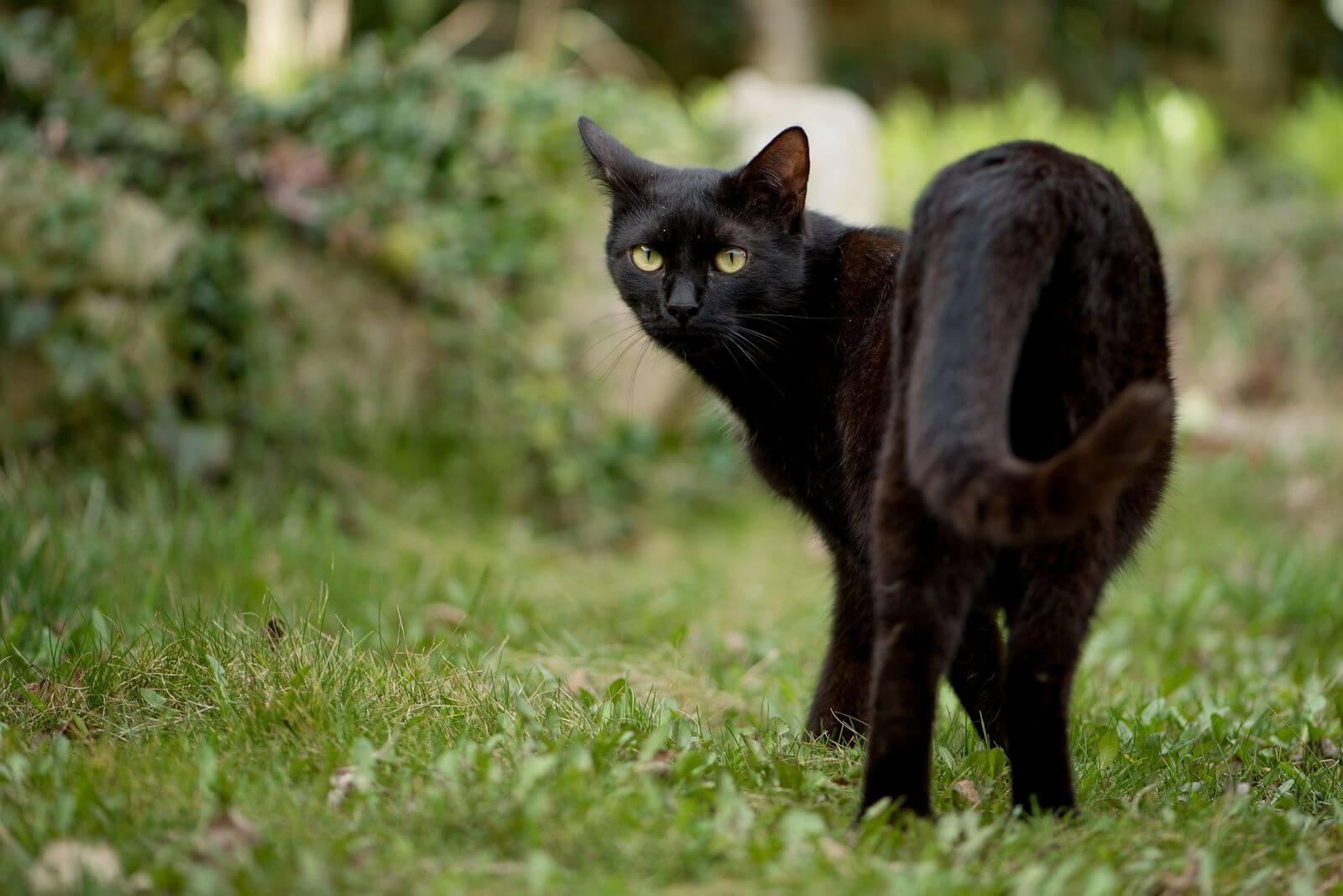 Убирать за чёрным котом во сне