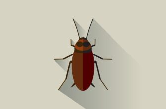К чему снятся тараканы по соннику