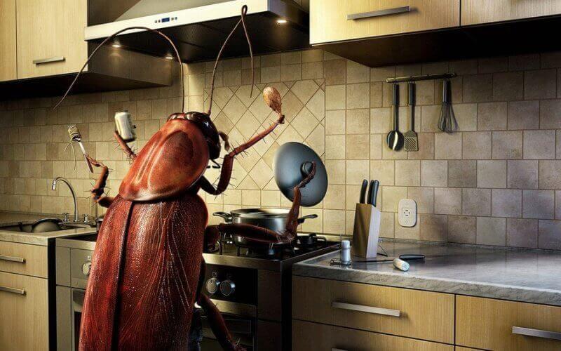 Тарган на кухні