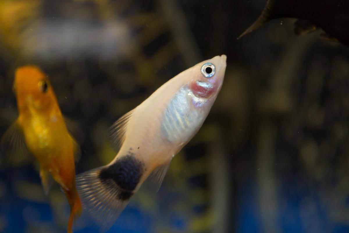До чого сниться акваріум з хворими рибками.
