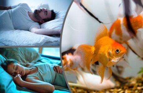 До чого сниться акваріум з рибками жінці