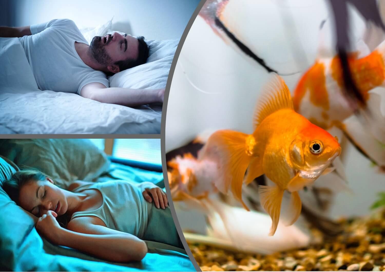 До чого сниться акваріум з рибами