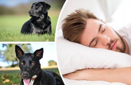 Чорна собака уві сні до чого