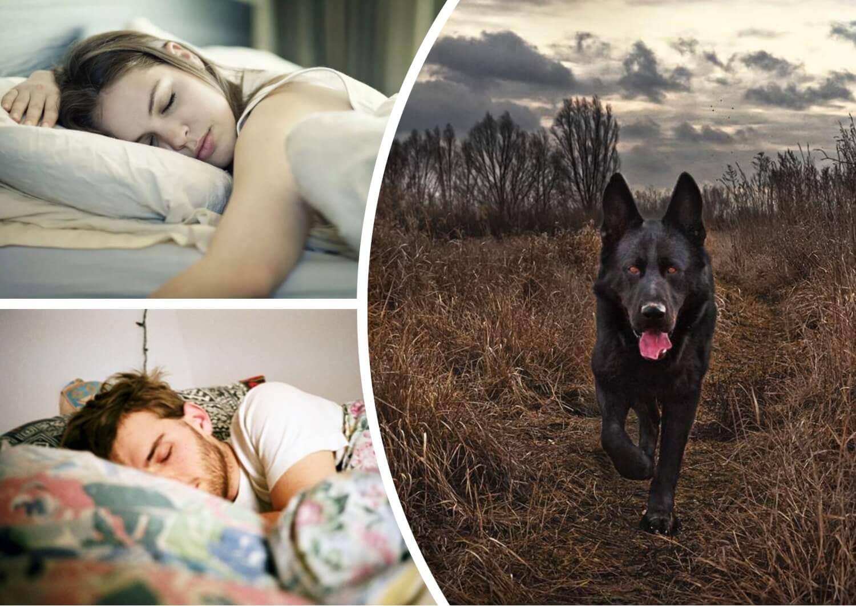К чему снится черная собака значение сюжета.