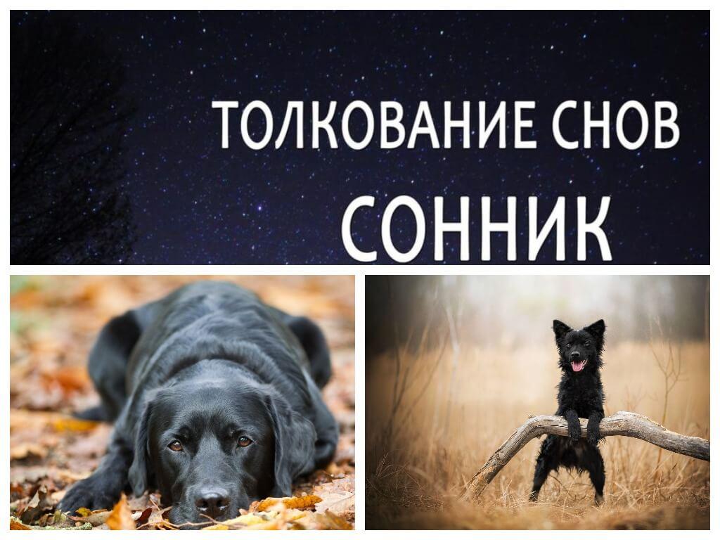 К чему снится черная собака по сонникам.