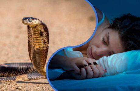 До чого сниться змія кобра