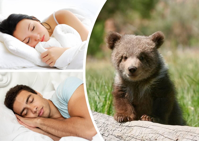 До чого сниться ведмежа тлумачення сну.