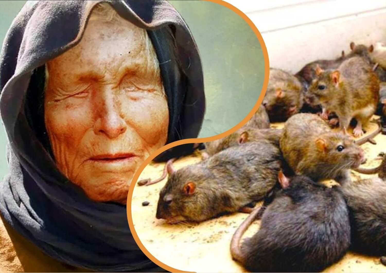 До чого сниться багато мишей по Вангі.