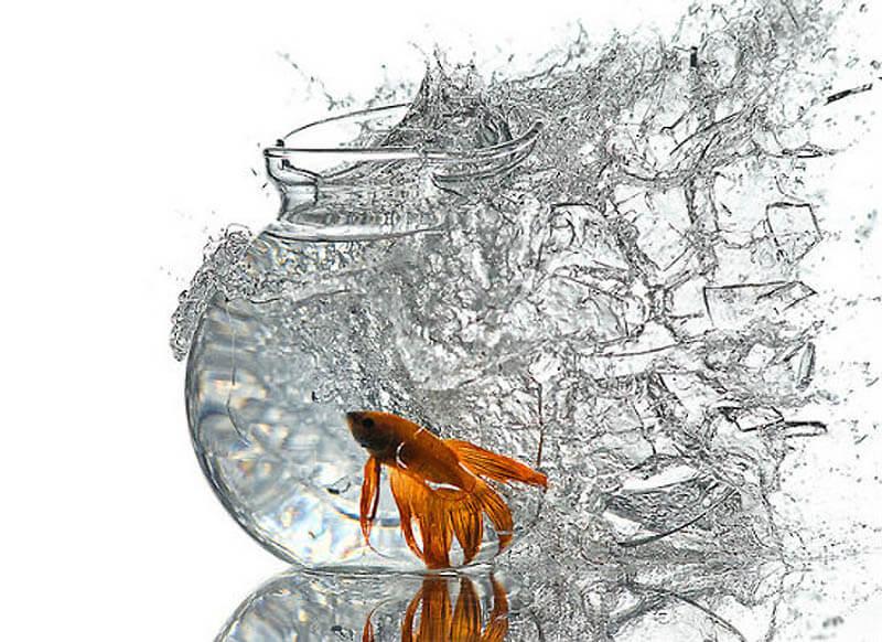До чого сниться розбитий акваріум