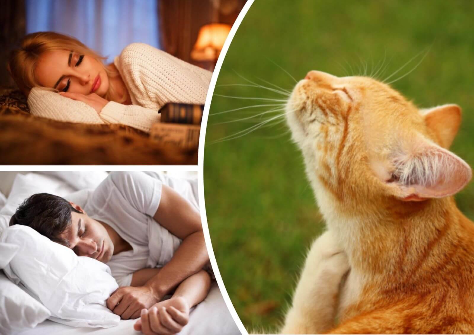 К чему снится рыжий кот значение сна.