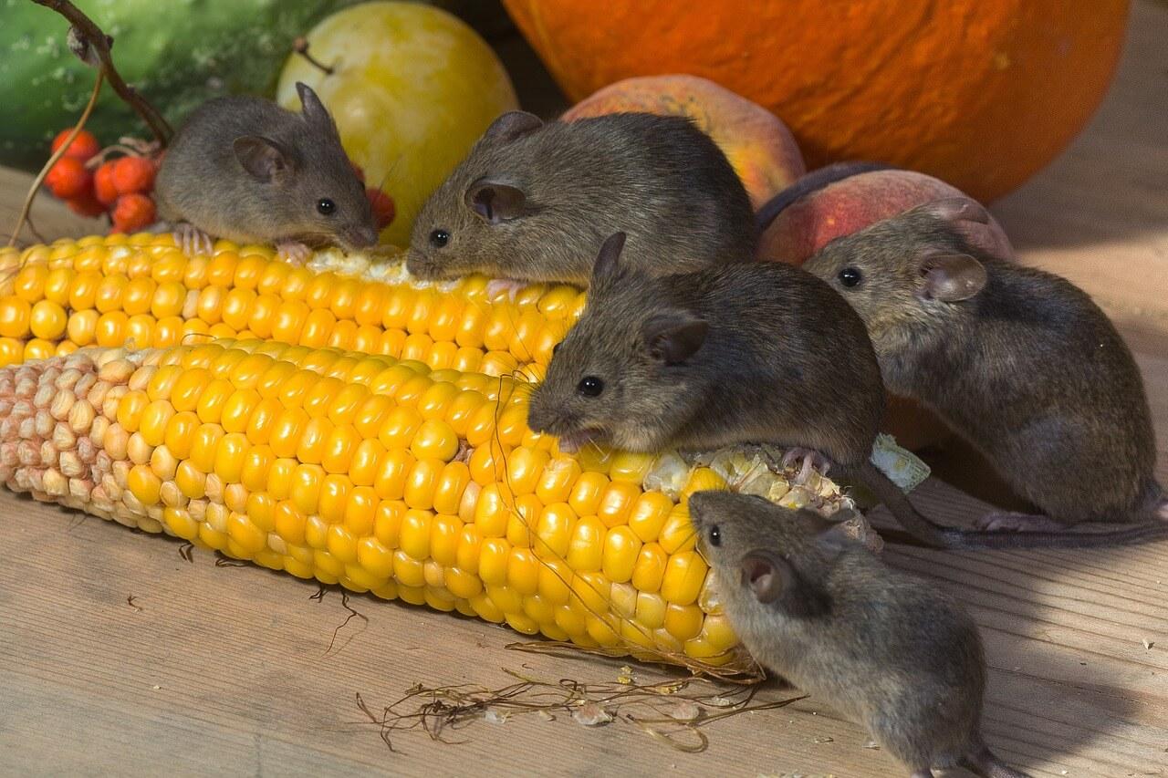 Маленькие мыши