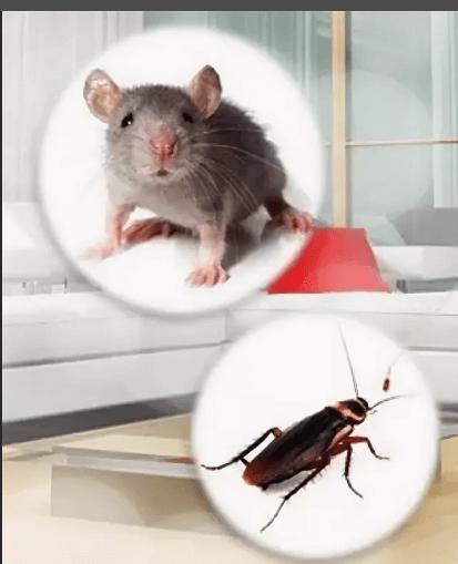 Миші і таргани
