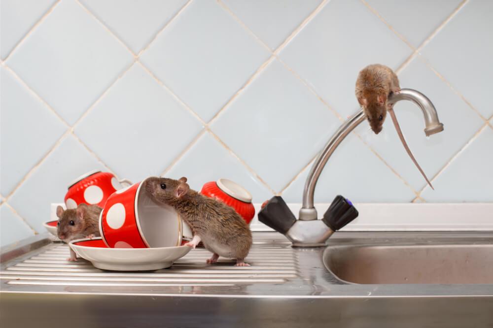 Мыши на кухне