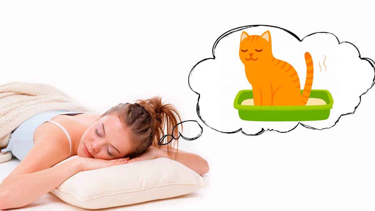 До чого сняться котячі екскременти