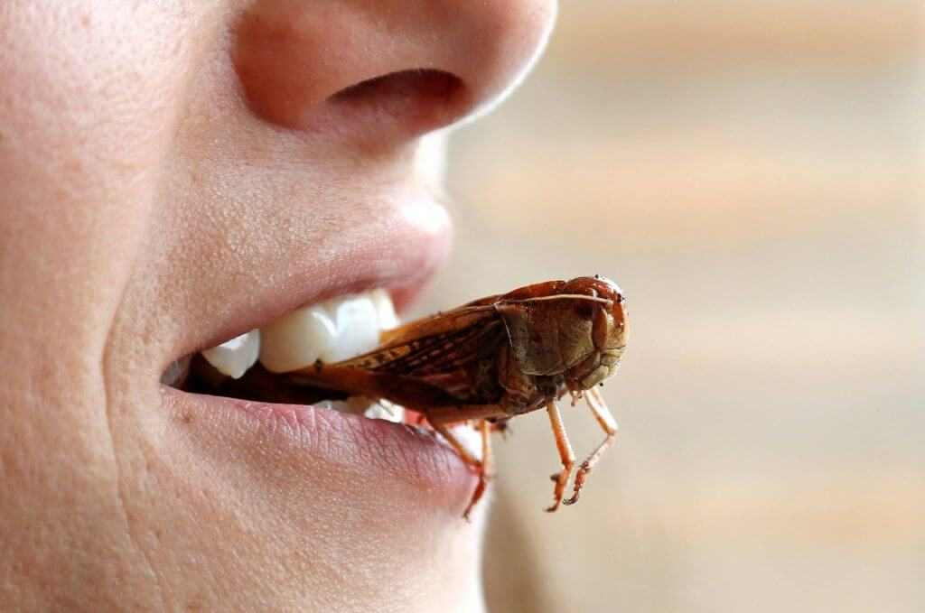 Тарган у роті