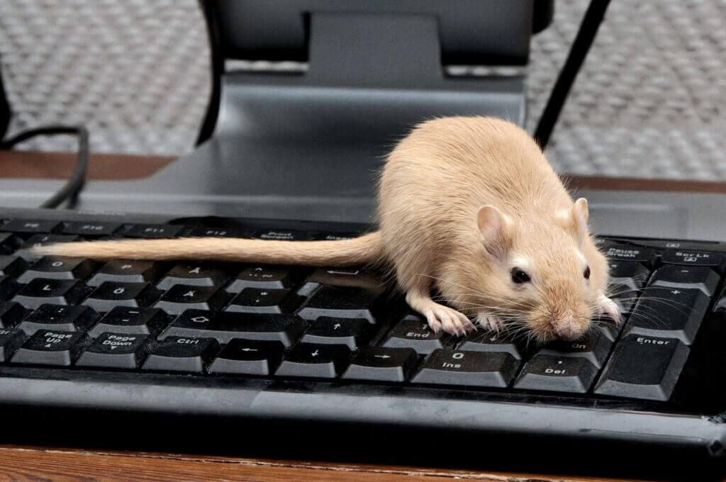 Мышь на рабочем месте