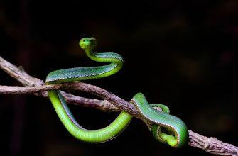 во сне укусила змея в ногу