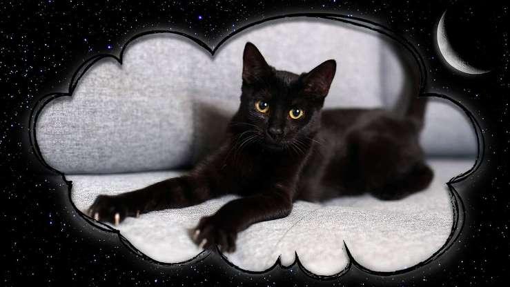 До чого сниться чорне кошеня сонник.
