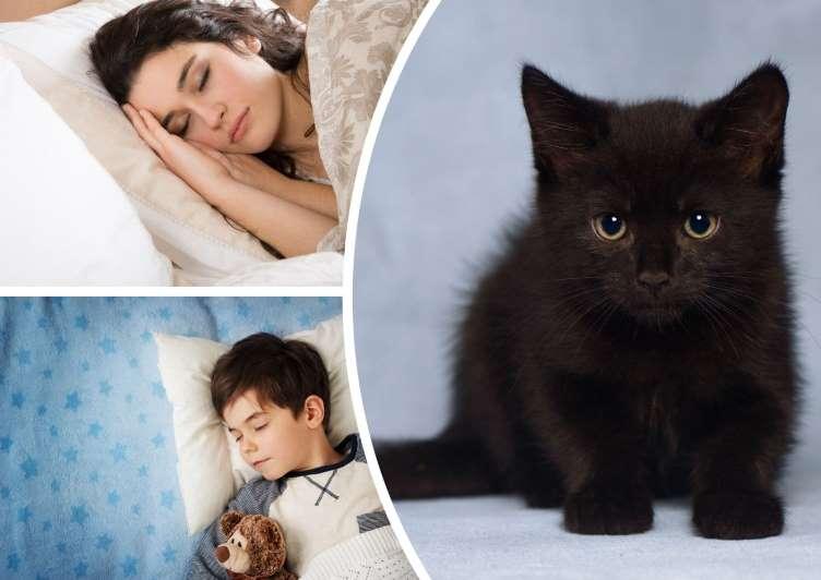 До чого сниться чорне кошеня тлумачення.