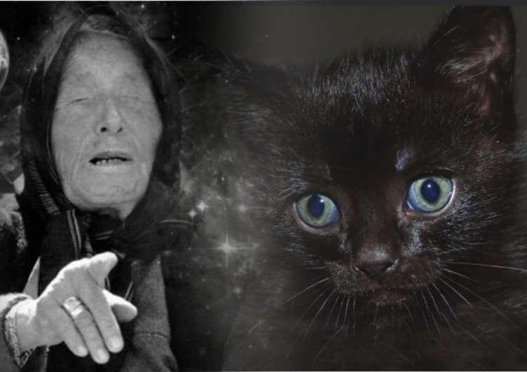 До чого сниться чорне кошеня трактування сну.