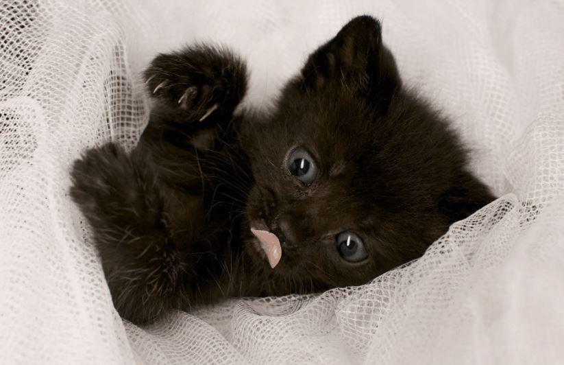 До чого сниться чорне кошеня значення.