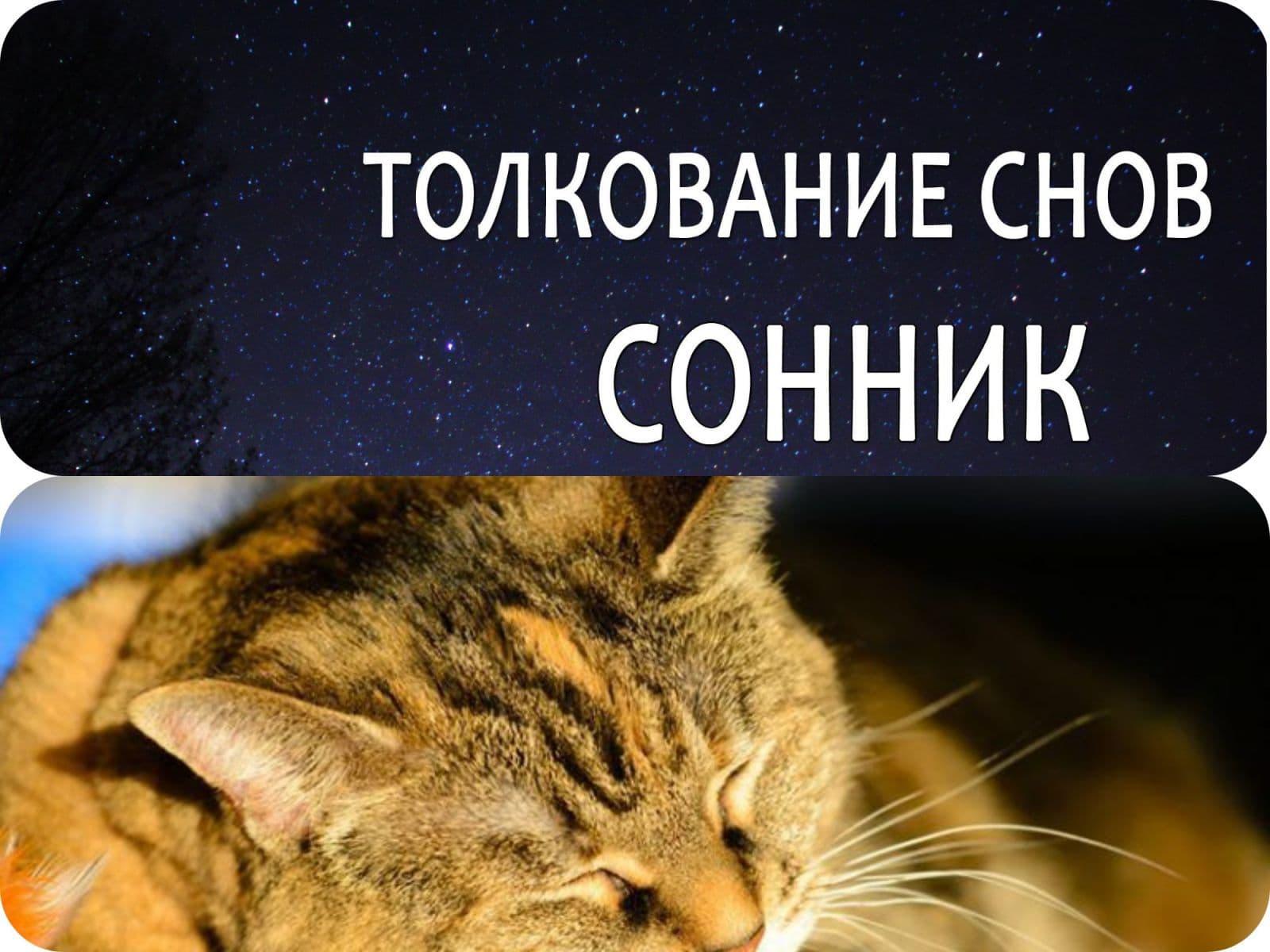 До чого сниться мертва кішка трактування.