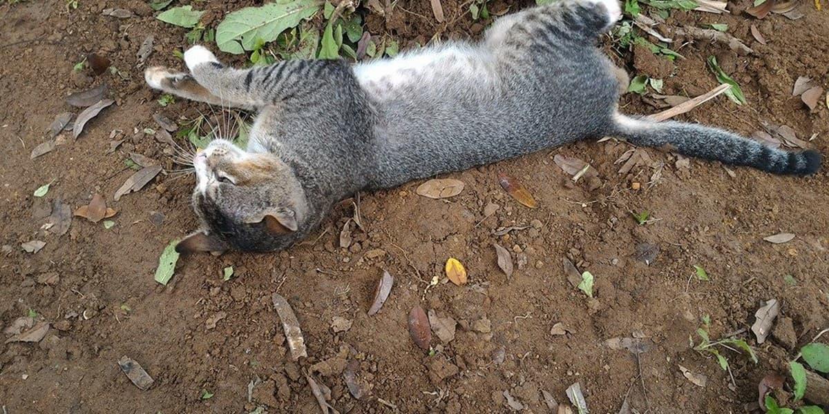 До чого сниться мертва кішка значення.