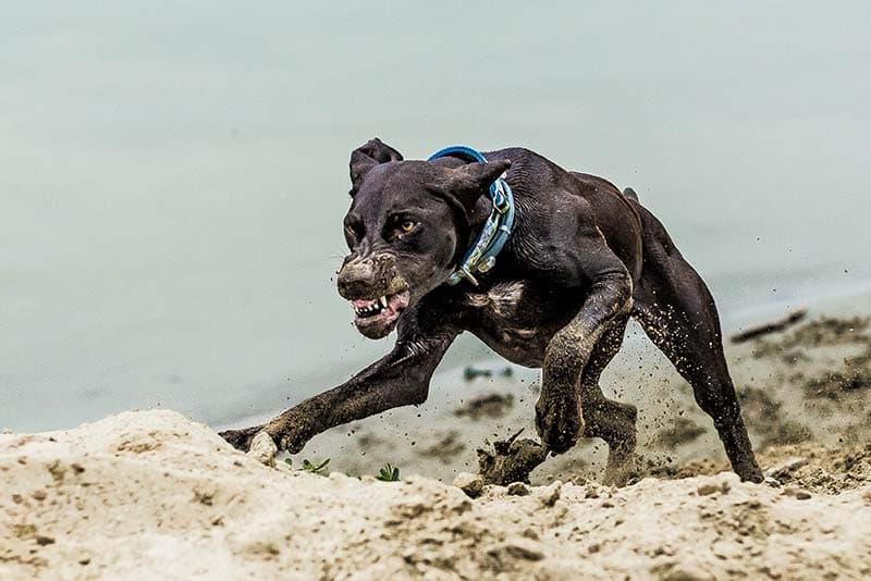До чого сниться напад собаки значення.