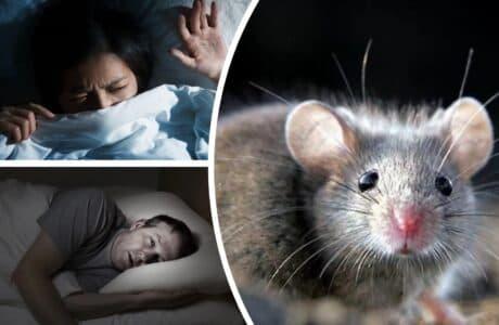 Наснилися миші