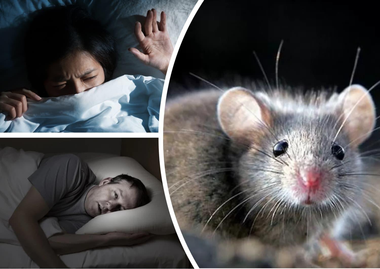 К чему снятся мыши по соннику.