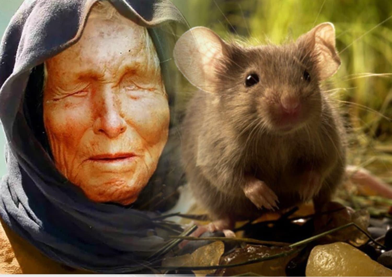 К чему снятся мыши толкование сна.