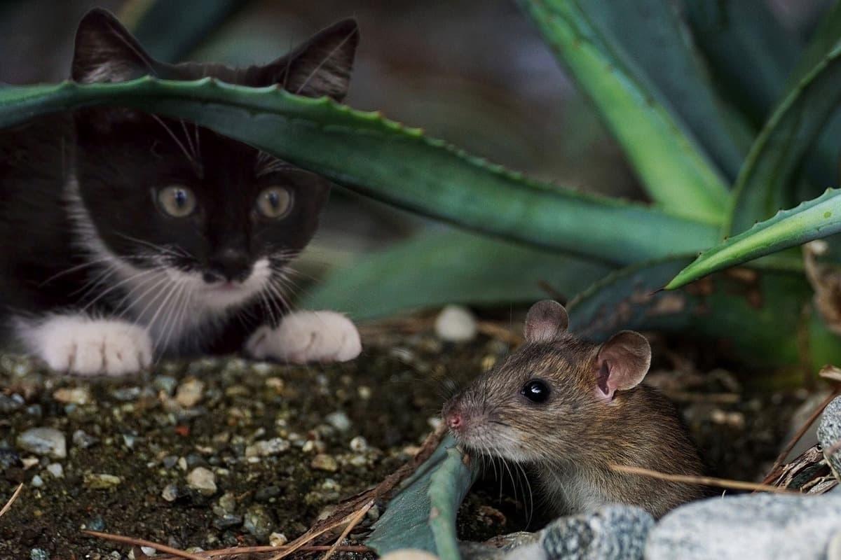 К чему снятся мыши толкование.