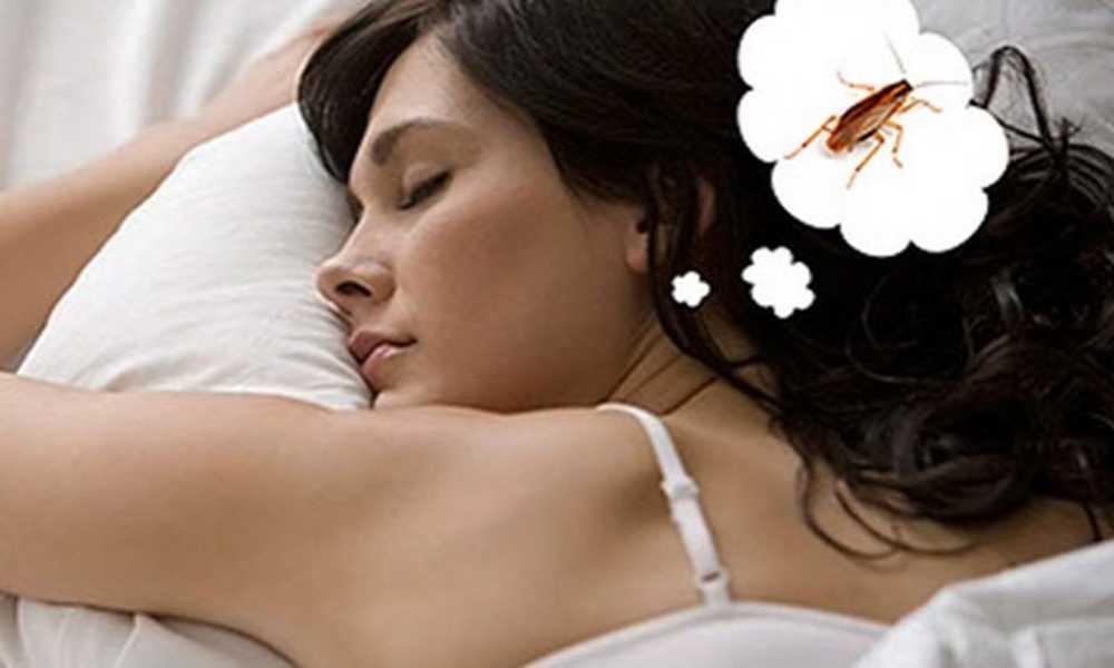 Таракан во сне