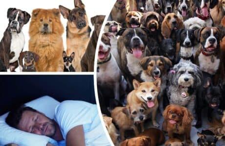 До чого сниться зграя собак чоловікові
