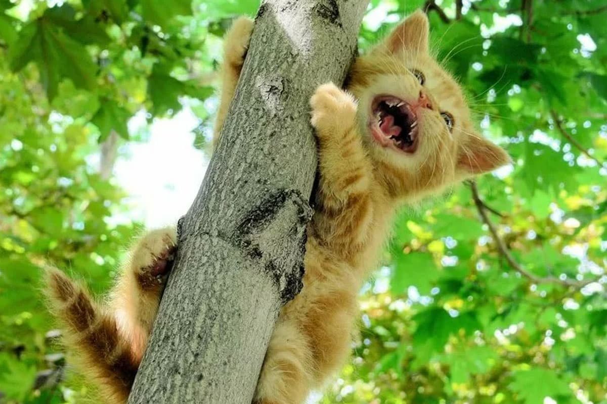 К чему снятся котята толкование сна.