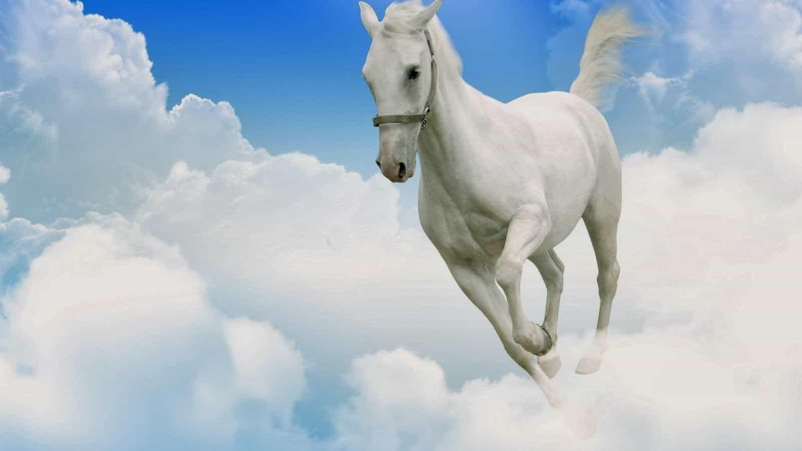 До чого сниться кінь.