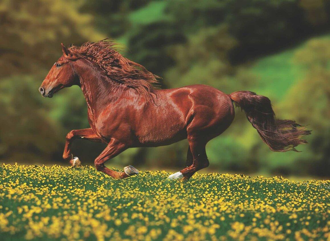 До чого сниться кінь трактування.