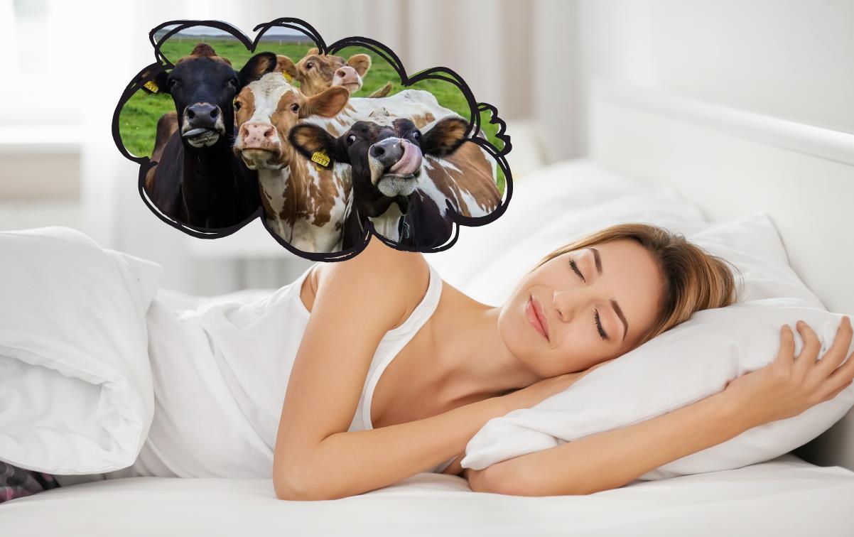 До чого сниться корова.