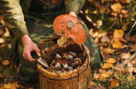 До чого сниться збирати гриби з небіжчиком