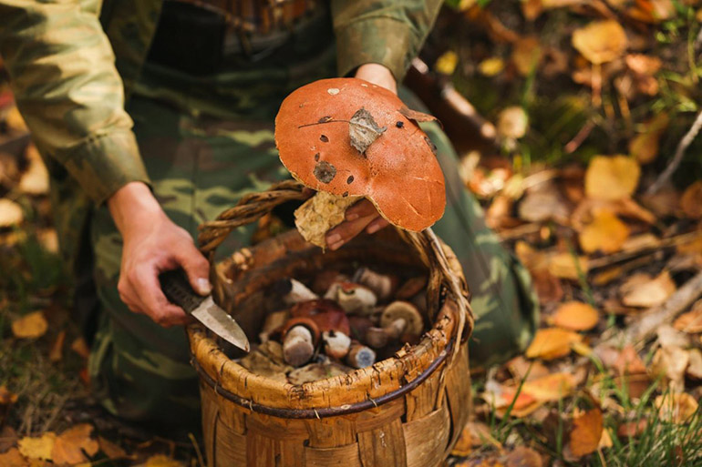 Збирати гриби уві сні