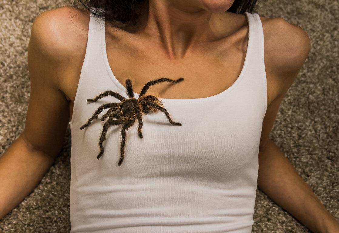 К чему снится паук трактовка сна.