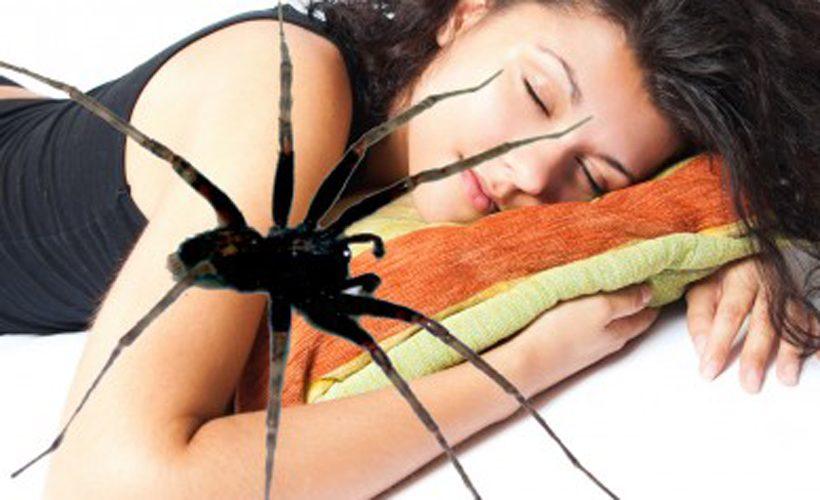 К чему снится паук значение.