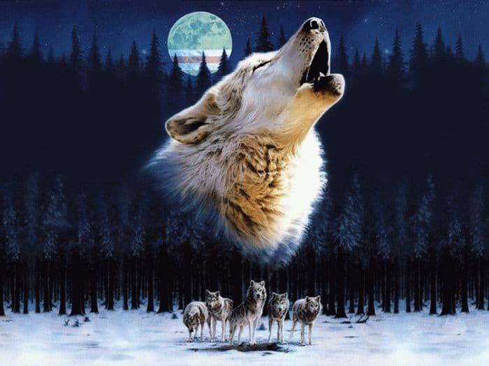 Вовки уві сні