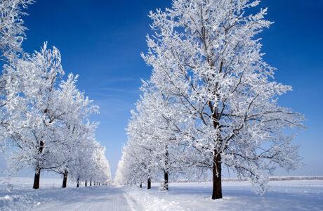 До чого сниться Сніг жінці, чоловікові — 80 тлумачень сну
