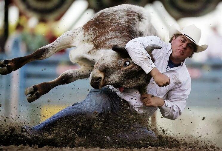 До чого сниться бик тлумачення.