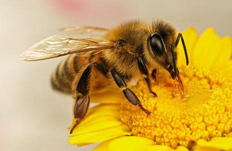 К чему снятся Пчелы во сне женщине, мужчине — 85 толкований сна