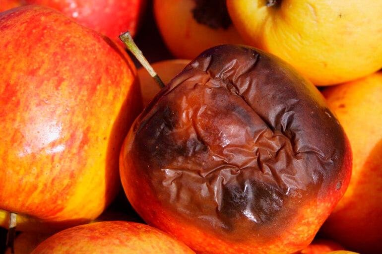 Гнилі яблука
